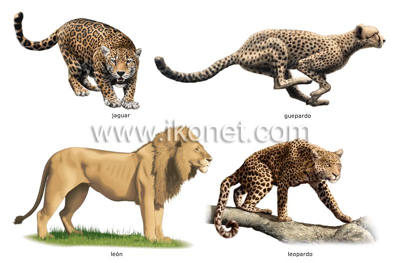 reino animal > mamíferos carnívoros > ejemplos de ...