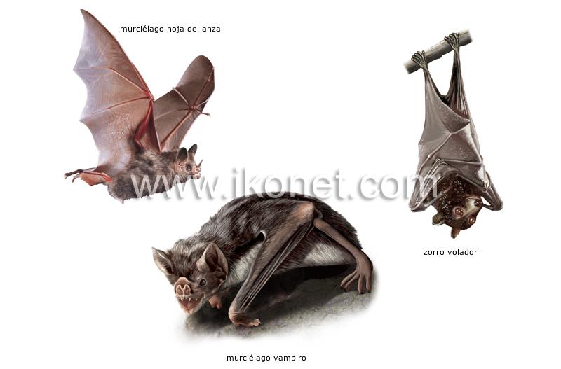 ejemplos de mamíferos voladores image