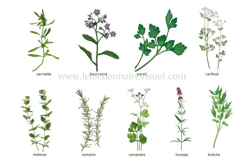 Alimentation et cuisine alimentation fines herbes - Herbes aromatiques cuisine liste ...