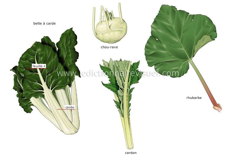 Alimentation et cuisine alimentation l gumes l gumes tiges image dictionnaire visuel - Feuilles de blettes en epinard ...